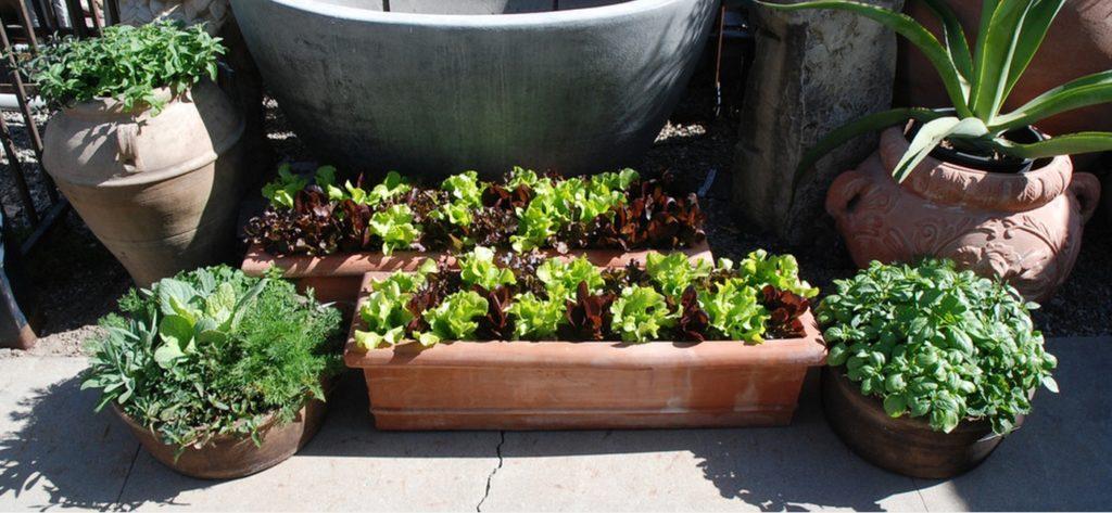 Eye of the Day Garden Design Center|Edible Container Gardening| Oscar Carmona