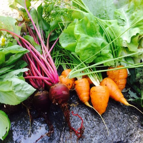Eye of the Day|Edible Gardening|The Conscious Garden