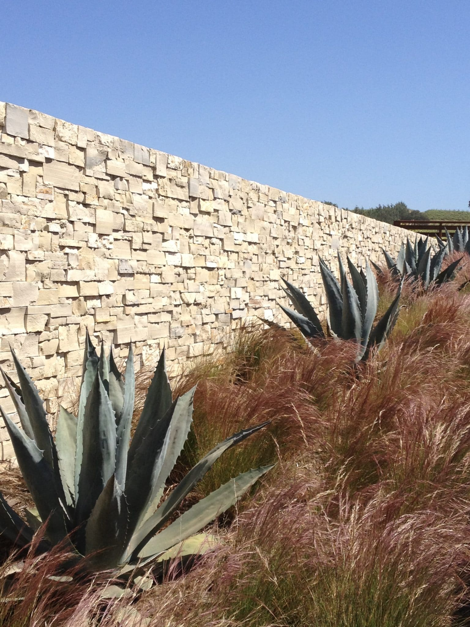 purple three awn is a great alternative for a california garden to the popular but invasive mexican feather grass - California Garden