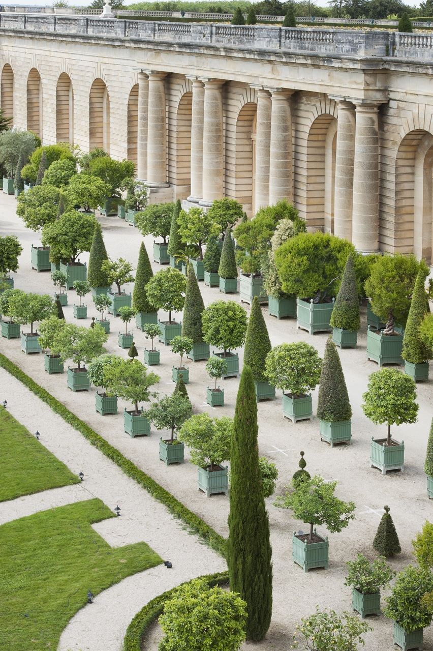 Iconic Versailles Citrus Planters In A Traditional Green Color