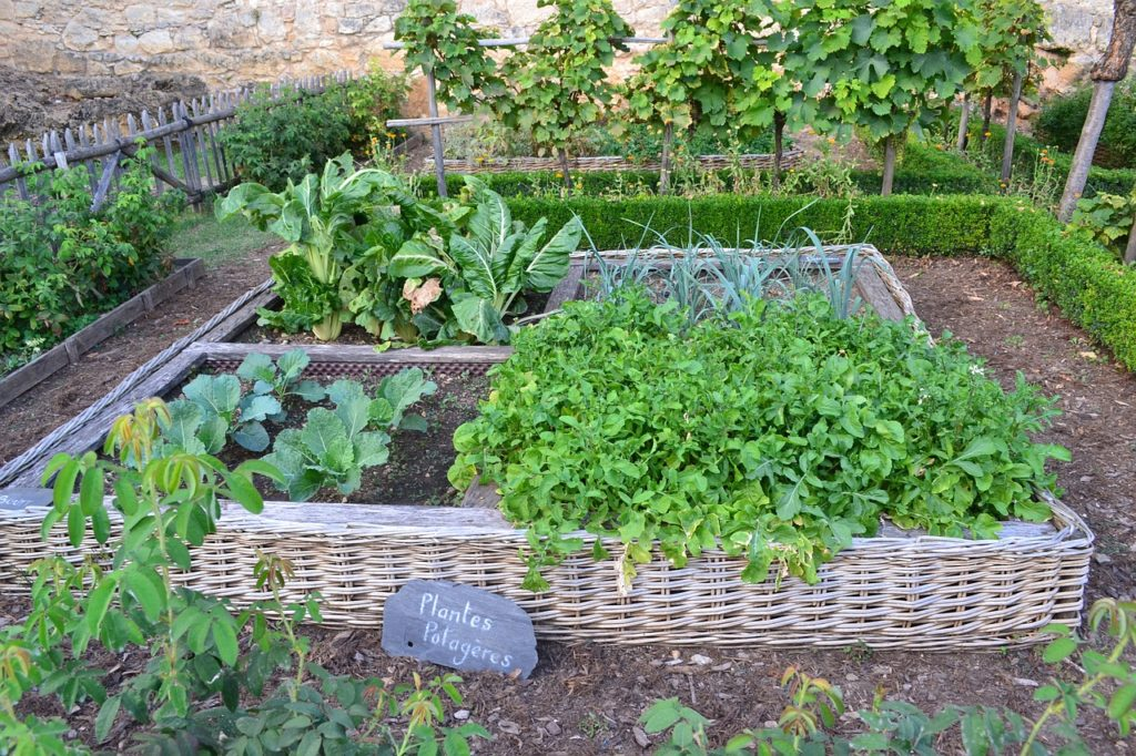 French kitchen Garden - Potager